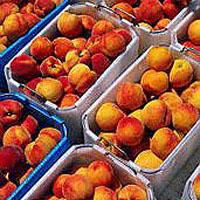 Nectarines: Main Image