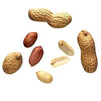 Peanuts: Main Image