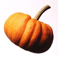 Pumpkin: Main Image