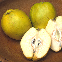 Quince: Main Image