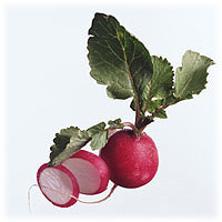Radishes: Main Image