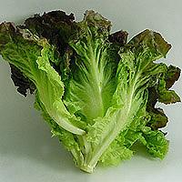 Red Leaf Lettuce: Main Image