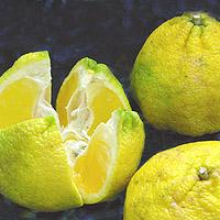 Ugli Tangelo Fruit: Main Image
