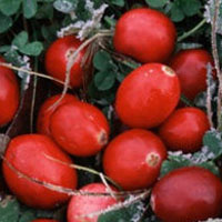 Cranberry: Main Image