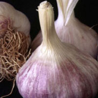 Garlic: Main Image